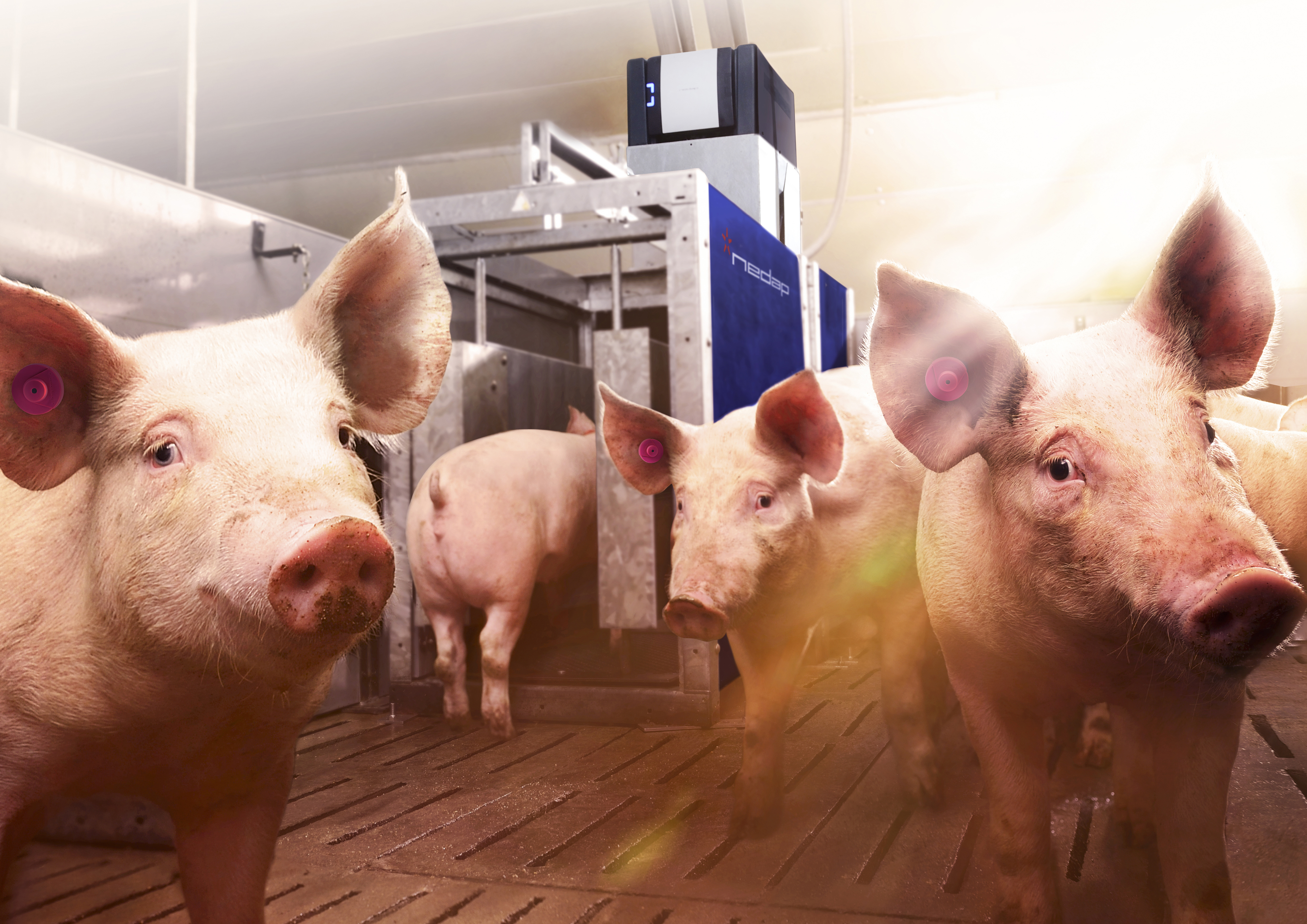 PPT, Pig Performing Test