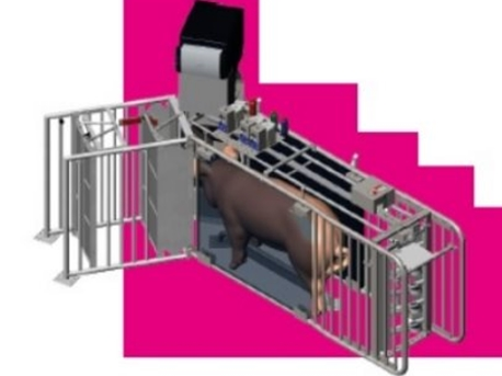All about the group housing of sows with feeding stations (NEDAP)