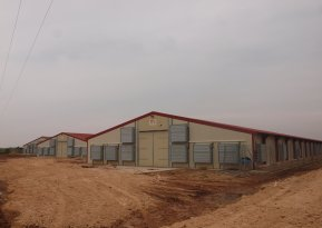 Improving the profitablity of our poultry rearing units